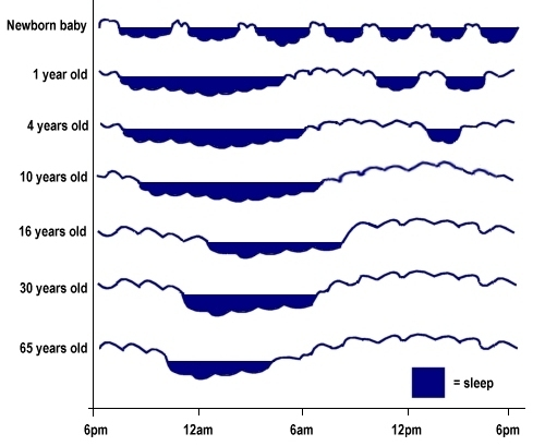 Changing sleep and activity patterns throughout life (image by Luke Mastin based on an image from The Brain from Top to Bottom)