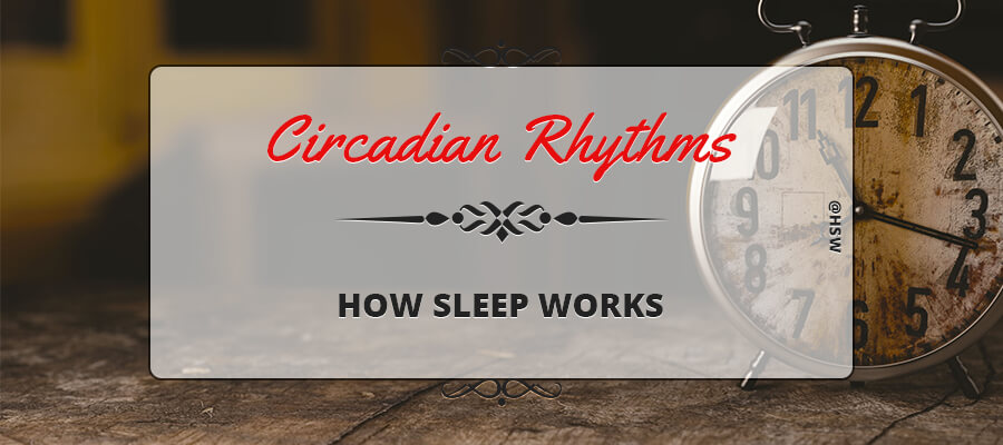 CIRCADIAN RHYTHMS – HOW SLEEP WORKS